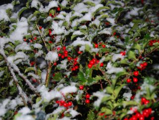 Winter photos of snow nov 30 2008 012