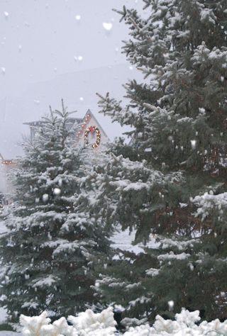Winter photos of snow nov 30 2008 018