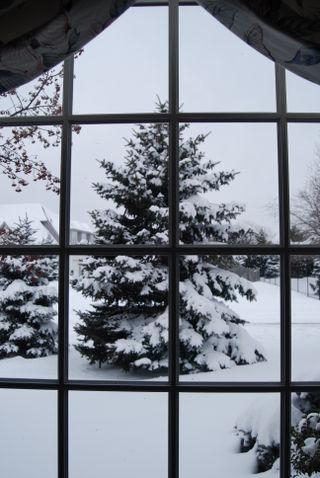 Winter storm photos for blog 006
