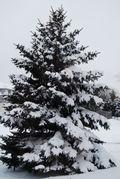 Winter storm photos for blog 014