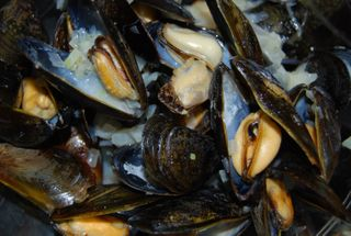Whisk mussels in cream sauce 008