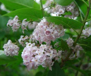 Twitter flowers 012