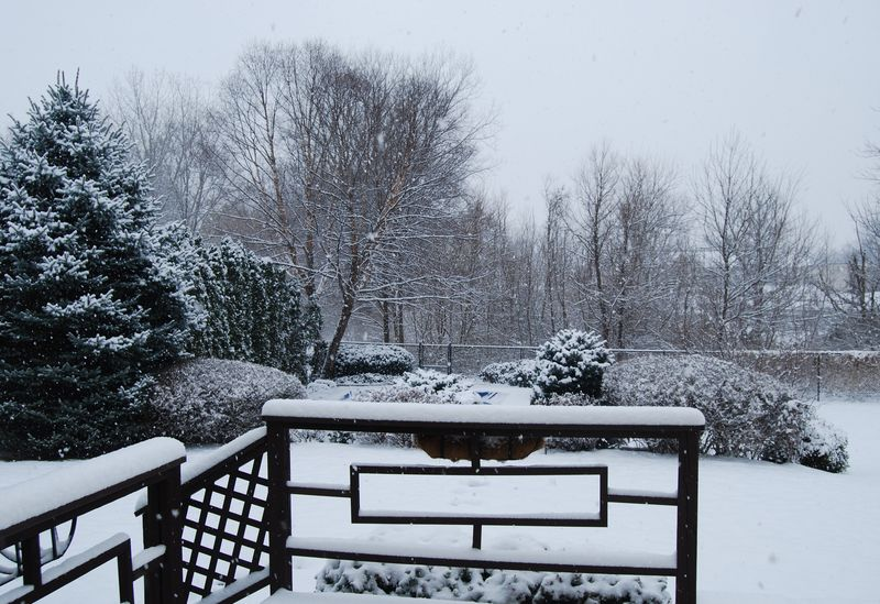 Dec 4 2010 Snow 007