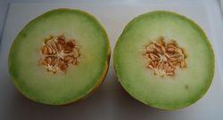 Lemon Melon 008