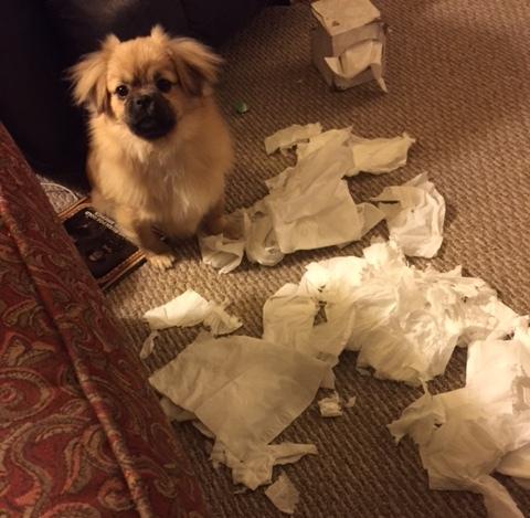 Gus and Kleenex